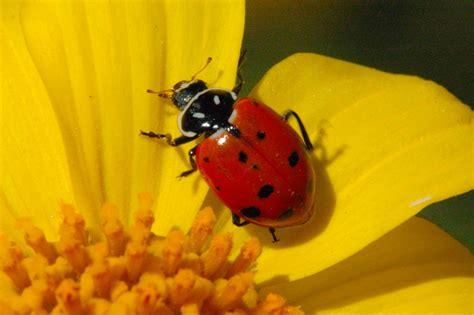 asian beetle allergy jpg 1280x853